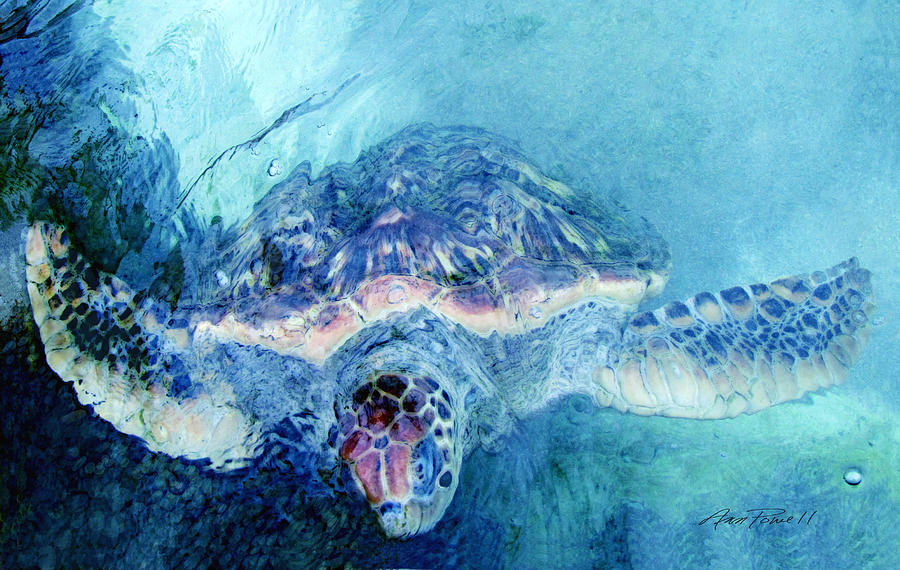 Sea Turtle Grand Cayman Digital Art By Ann Powell