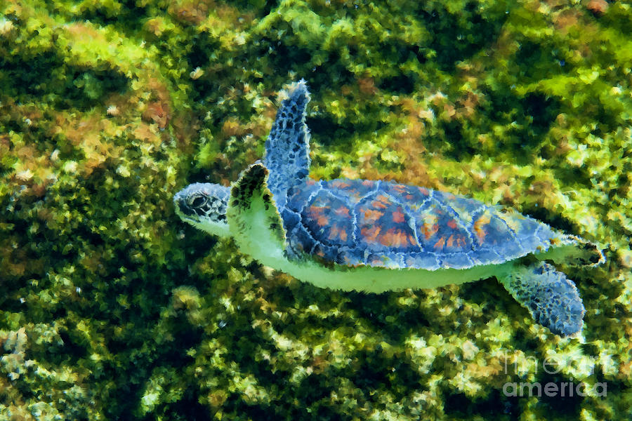 Sea Turtle Photograph - Sea Turtle Swimming In Water by Dan Friend
