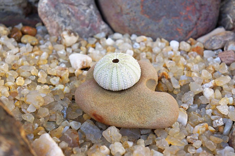 Sea Urchin Art Prints Coastal Beach Agates Photograph
