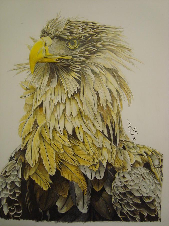 Birds Drawing - Seaeagel by Per-erik Sjogren