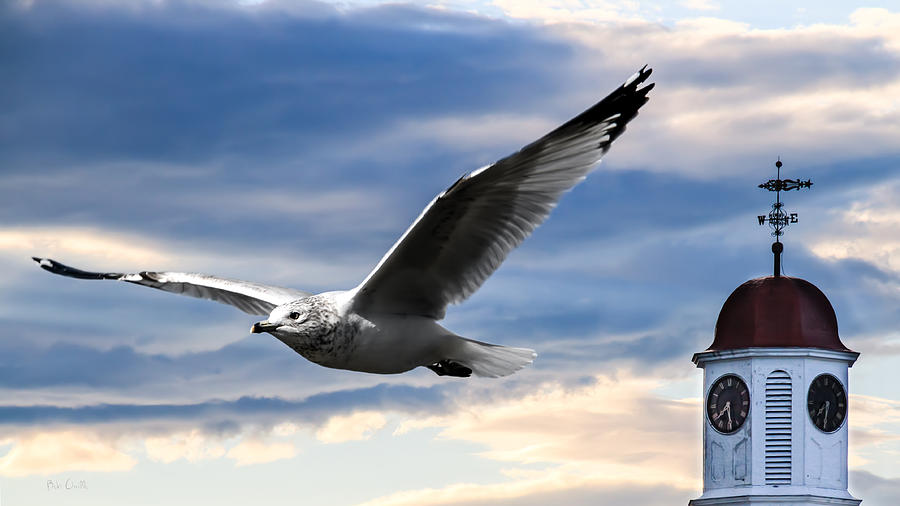 Seagull Photograph - Seagull And Clock Tower by Bob Orsillo