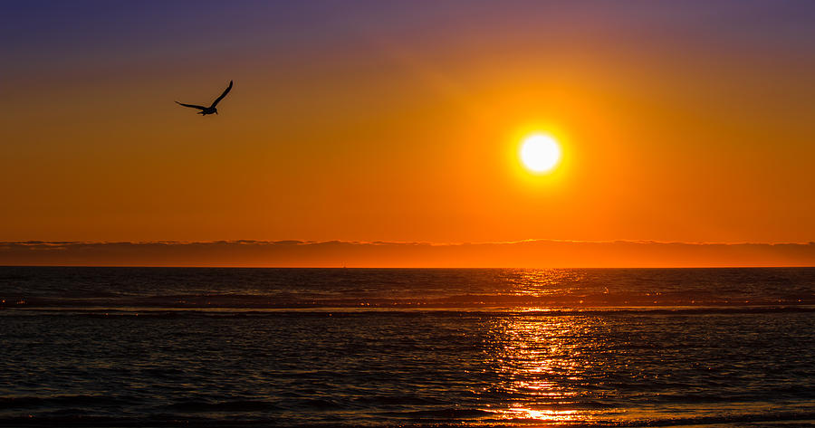 Bird Photograph - Seagull At Sunset by Chris Steele