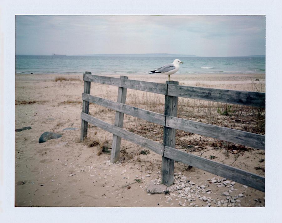 Seagull Photograph - Seagull by Brady D Hebert