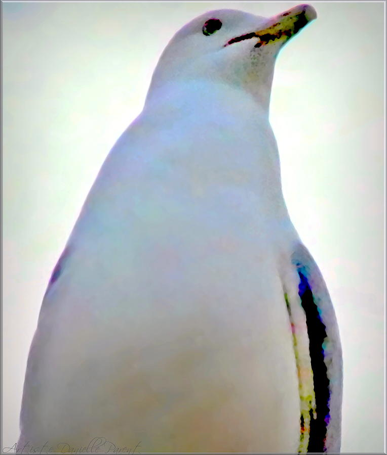 Canada Photograph - Seagull Close Up View by Danielle  Parent
