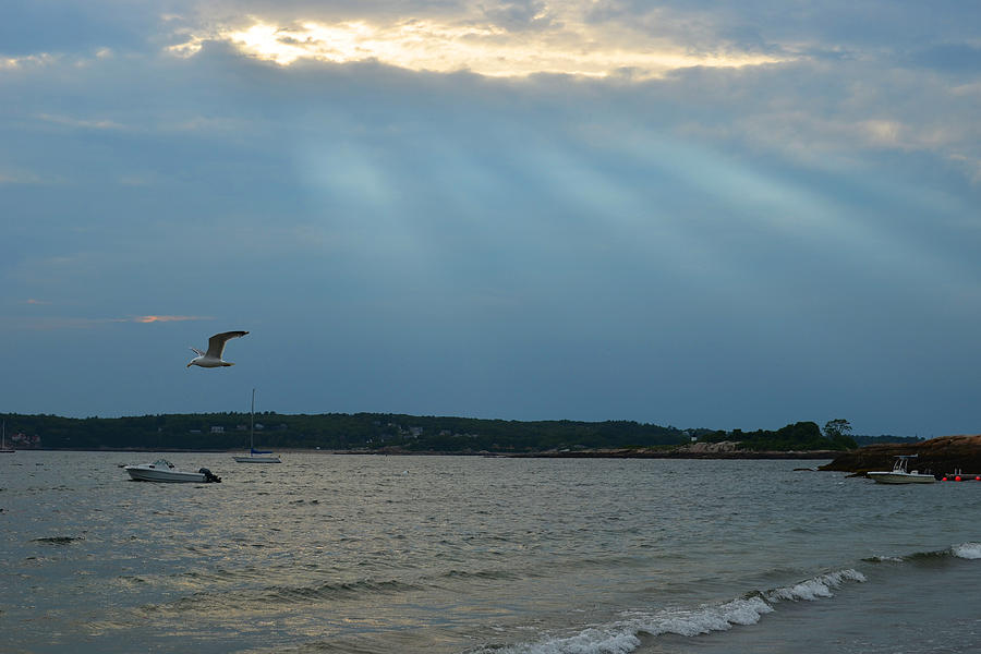 Gloucester Photograph - Seagull Flying Over Niles Beach by Toby McGuire