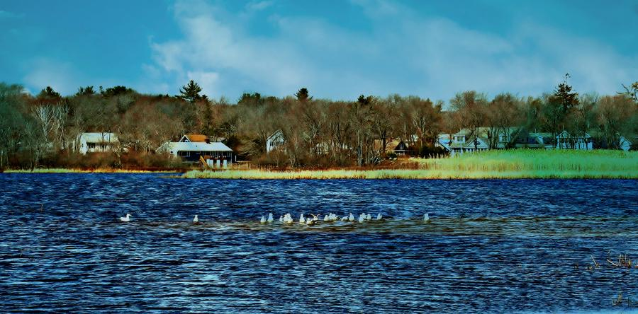 Scenic Photograph - Seagull Gathering by Barbara S Nickerson