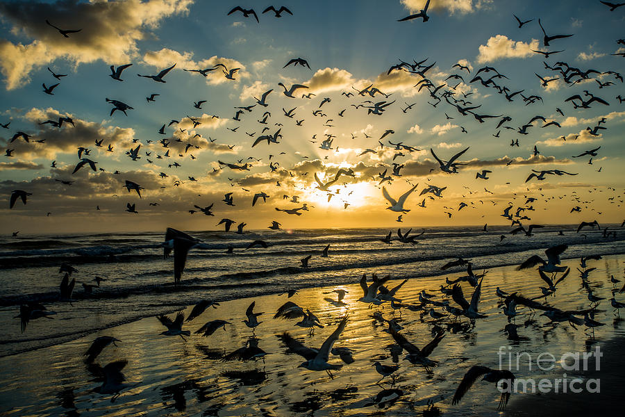 Seagull Photograph - Seagull Migration by Mina Isaac
