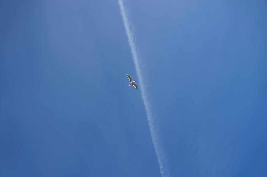 Seagull Photograph - Seagull In Flight by Andrea Osborn