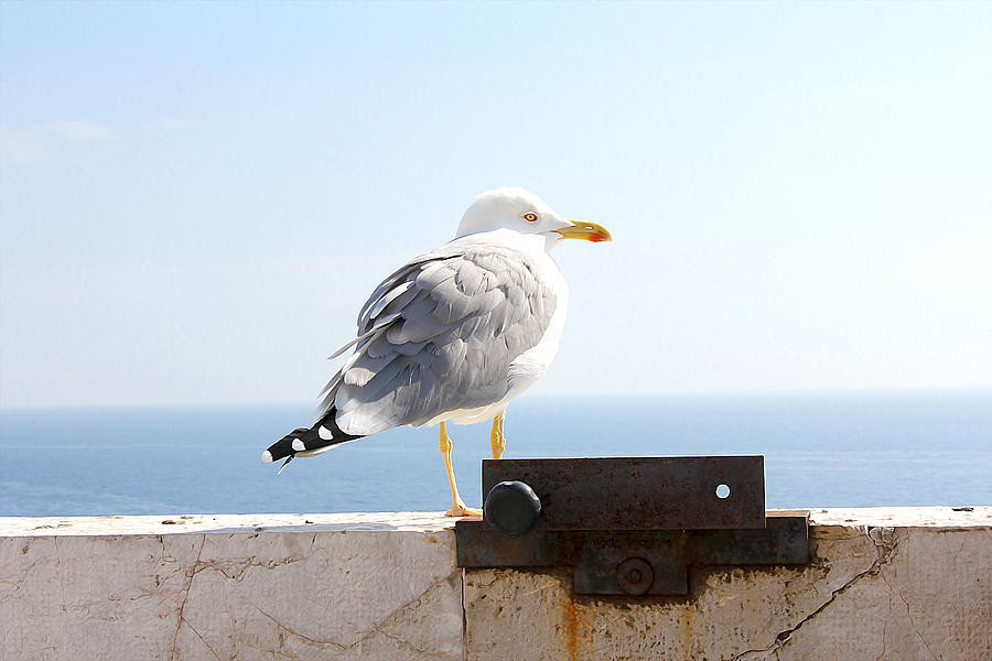 Seagull by Meghan OHare