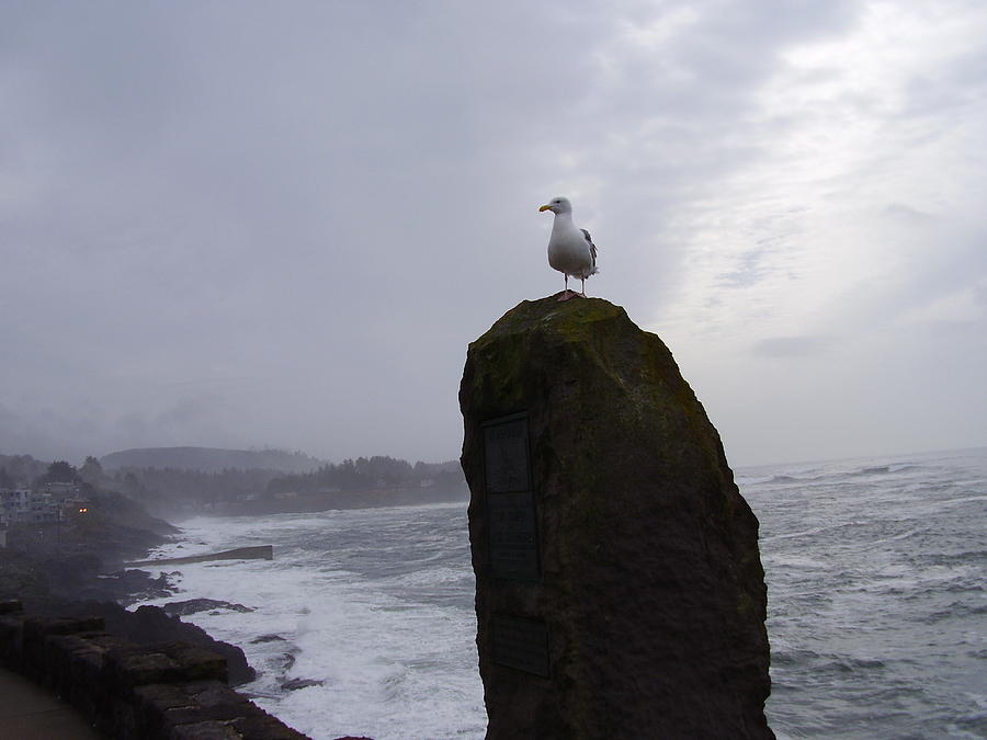 Ocean Photograph - Seagull On A Boulder by Yvette Pichette