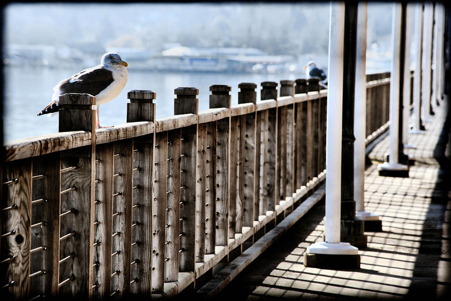 North Bend Photograph - Seagull On The Boardwalk by Sally Bauer