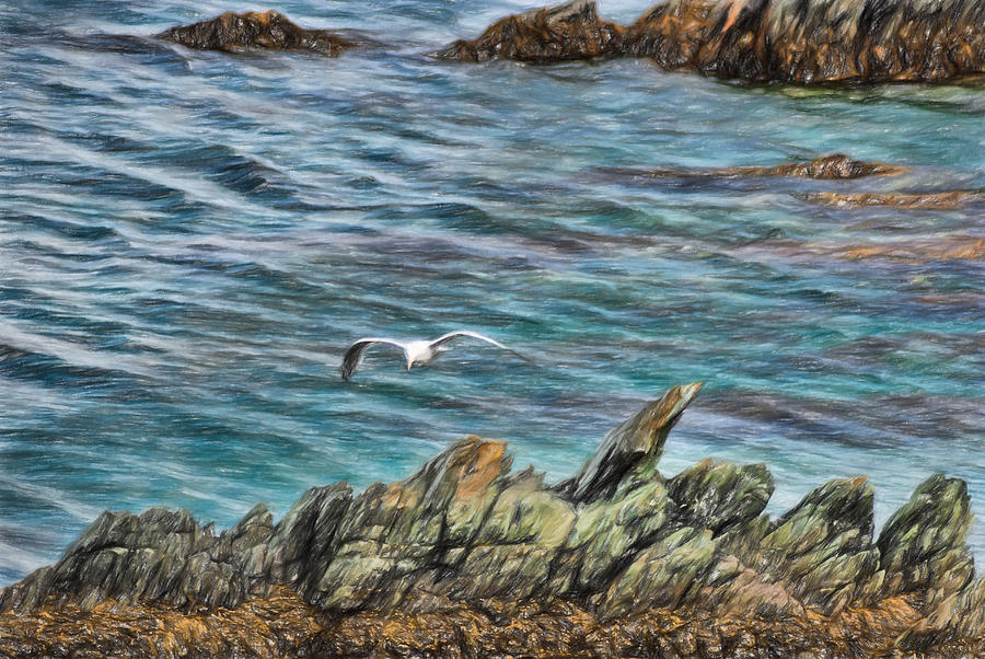 Bird Photograph - Seagull Over Rocks by Boss Photographic