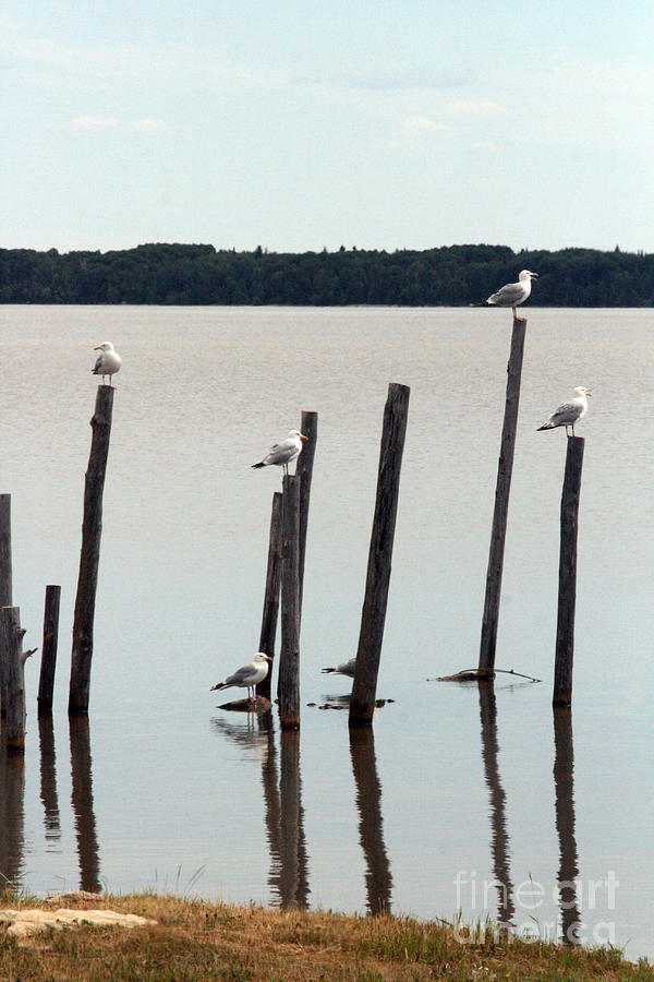 Nature Photograph - Seagull Sticks by Mary Mikawoz