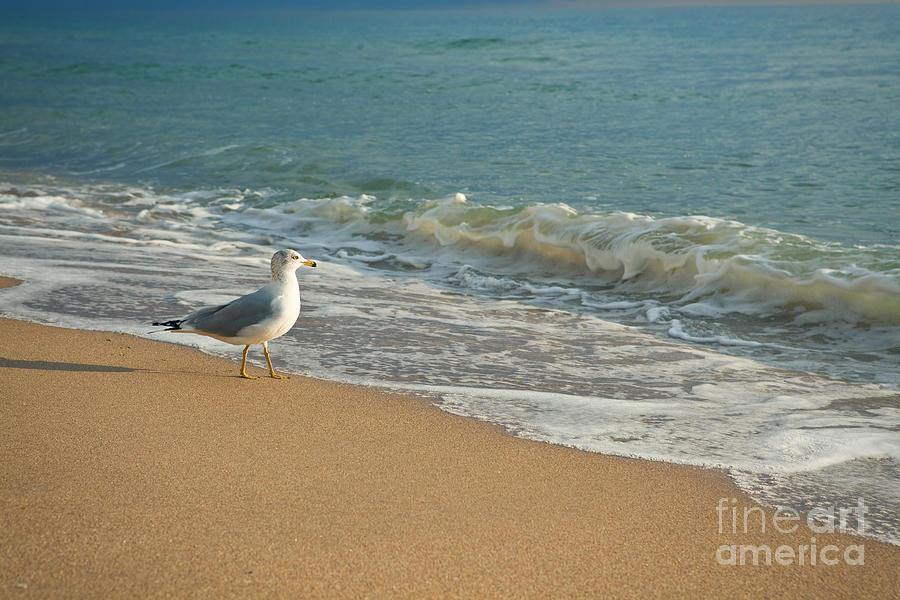 Bird Photograph - Seagull Walking On A Beach by Sharon Dominick