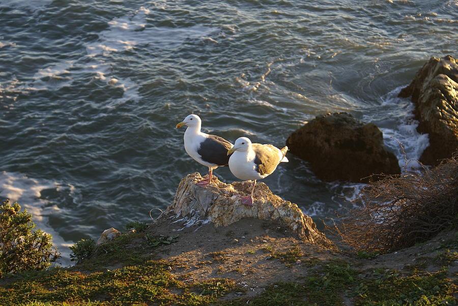 Barbara Snyder Digital Art - Seagulls Aka Pismo Poopers by Barbara Snyder