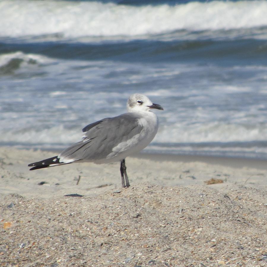 Sea Photograph - Seagulls At Fernandina 2 by Cathy Lindsey