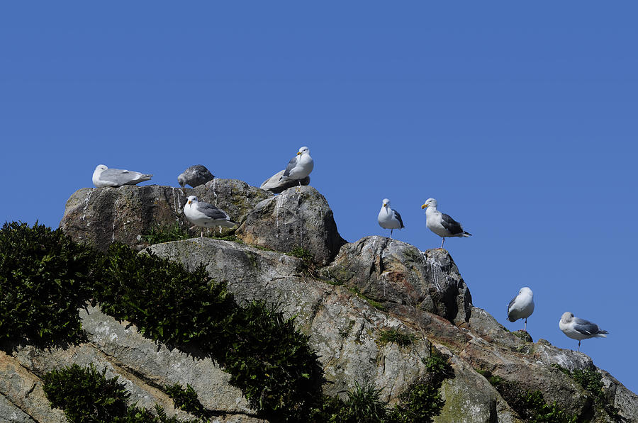 Blue Photograph - Seagulls by Don and Bonnie Fink