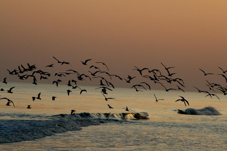 Seagulls Photograph - Seagulls Feeding At Dusk by Beth Andersen