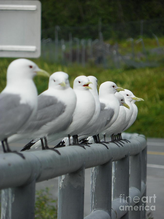 Seagulls Photograph - Seagulls by Jennifer Kimberly