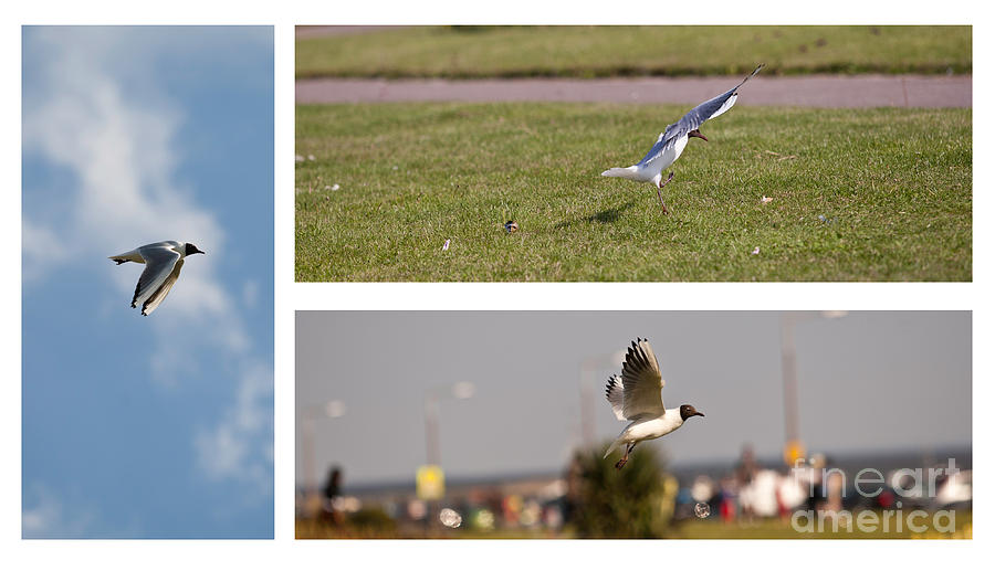 Seagulls Photograph by Lesley Rigg