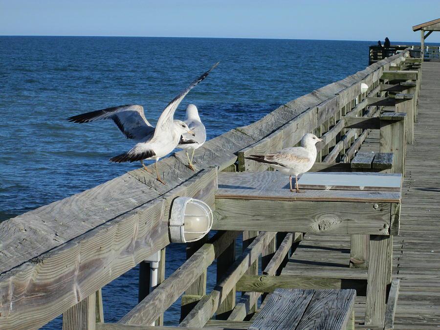 Seagulls Photograph - Seagulls by Nelson Watkins