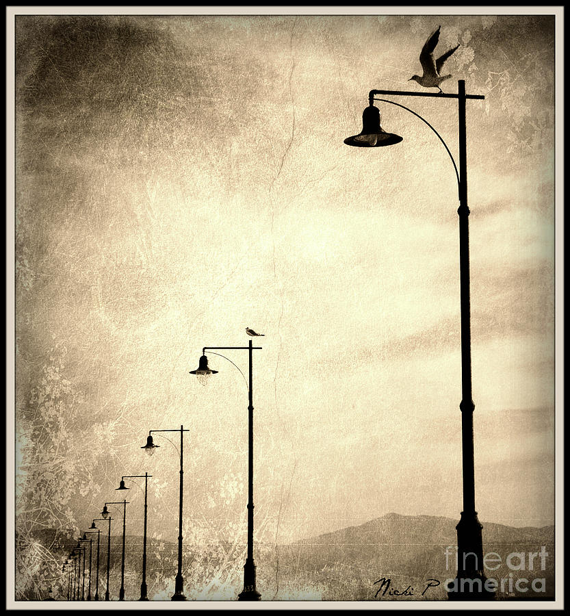 Street Lamps Photograph - Seagulls by Nicki P
