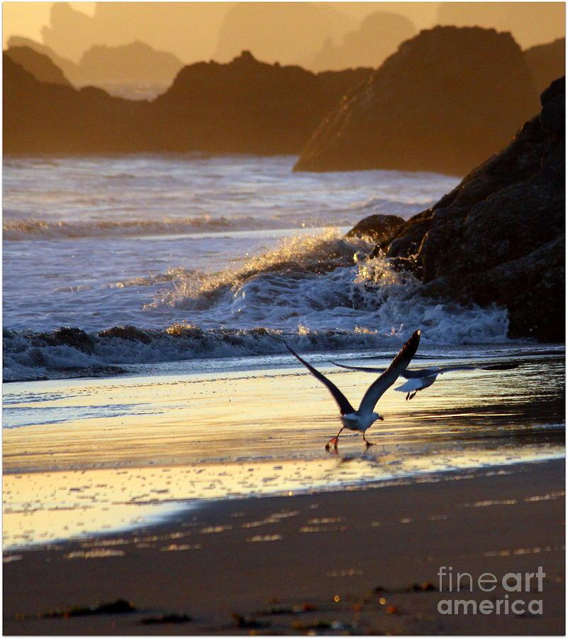 Ocean Photograph - Seagulls On Beach by Irina Hays