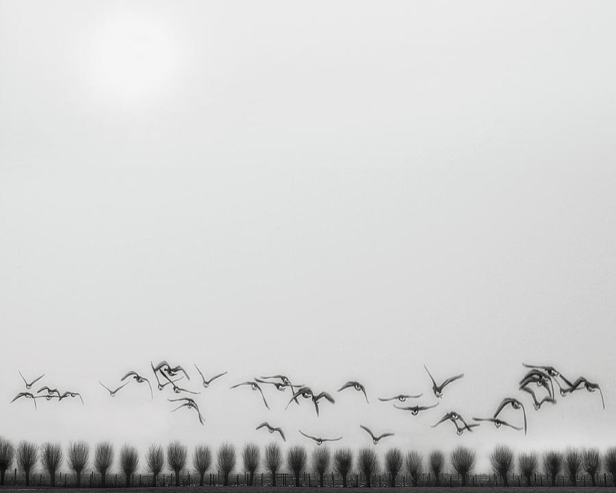 Winter Photograph - Seagulls Over The Fields by Yvette Depaepe