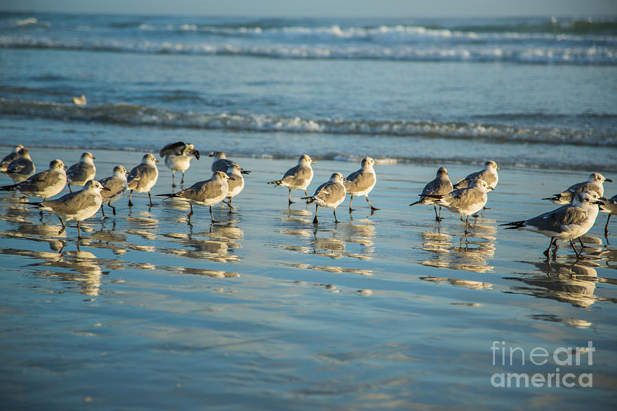 Beach Photograph - Seagulls Waiting by Mina Isaac