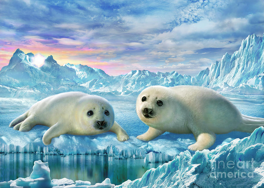 Adrian Chesterman Digital Art - Seal Pups by Adrian Chesterman
