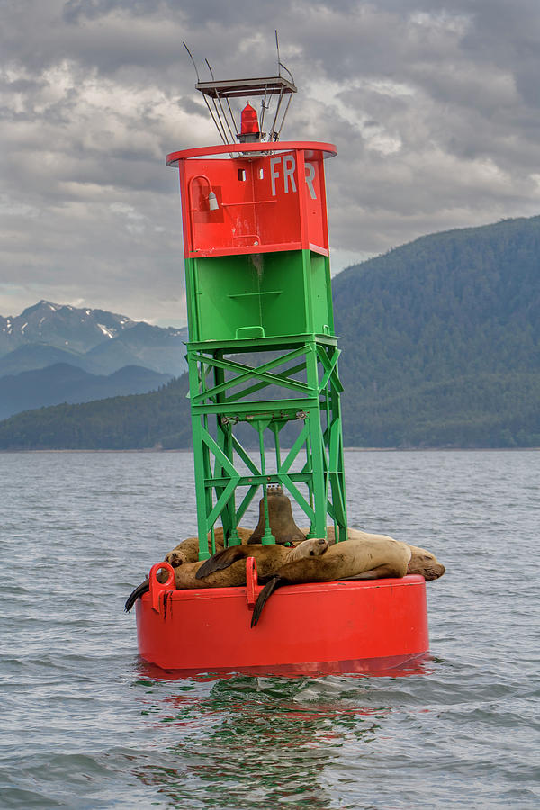 Alaska Photograph - Seals Resting On Buoy by Tom Norring