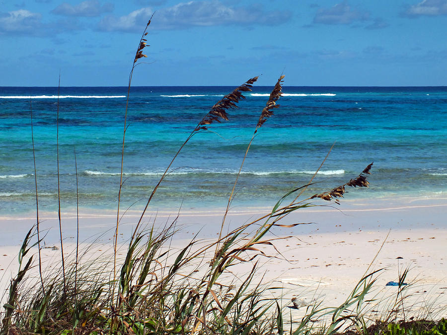 Seaoat Plants and Beach on Eleuthera by Duane McCullough