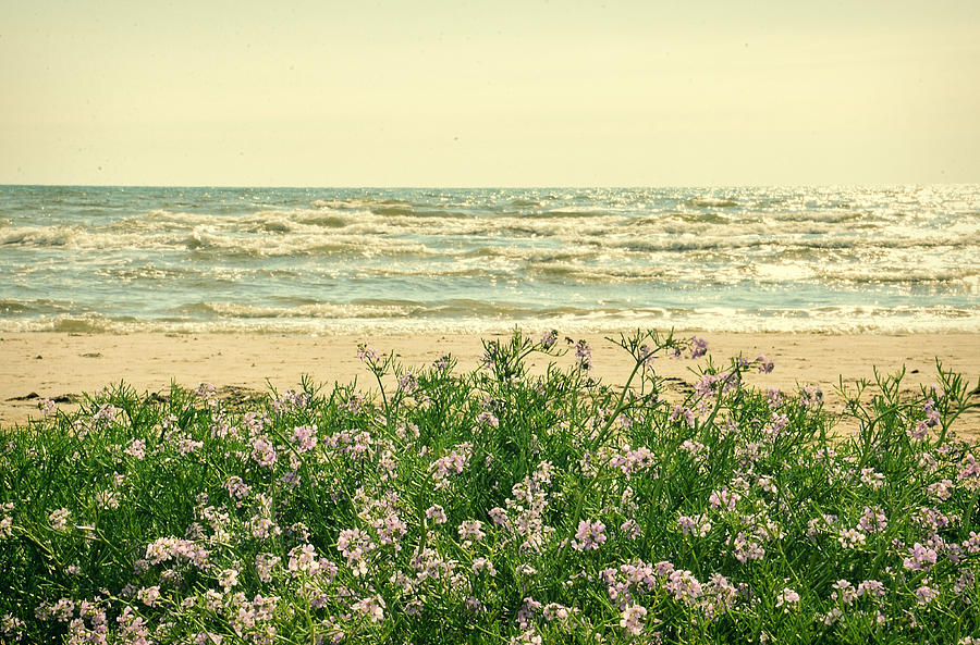 Seascape Photograph - Seascape by Gynt