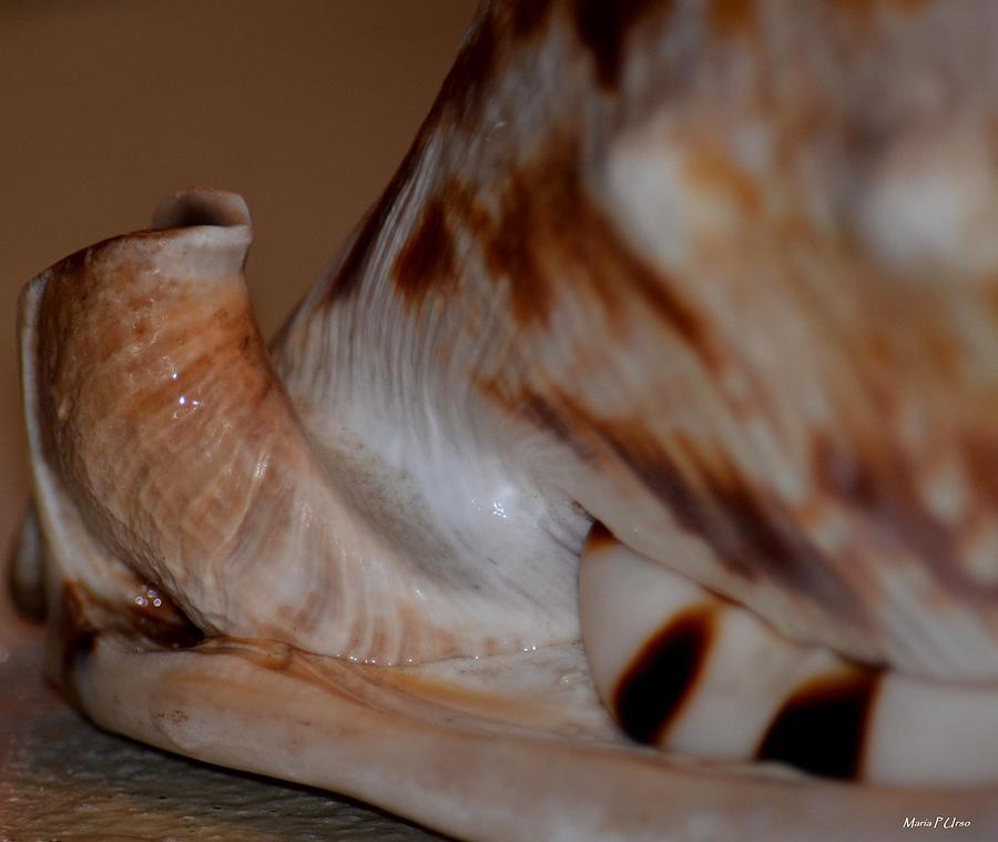 Seashell Photograph - Seashell Abstract 1 by Maria Urso