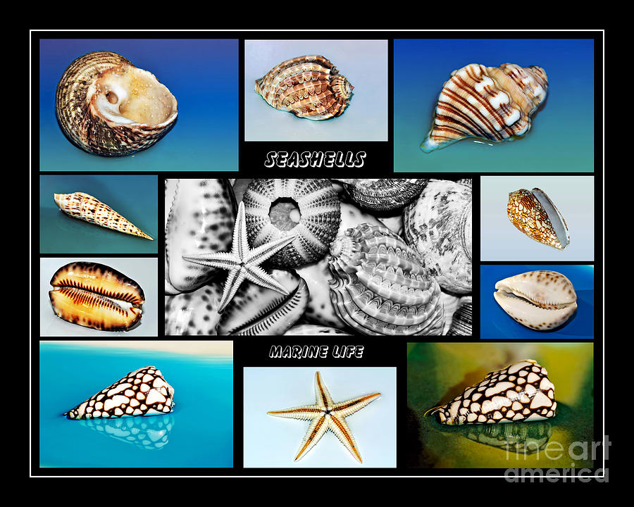 Photography Photograph - Seashell Collection by Kaye Menner