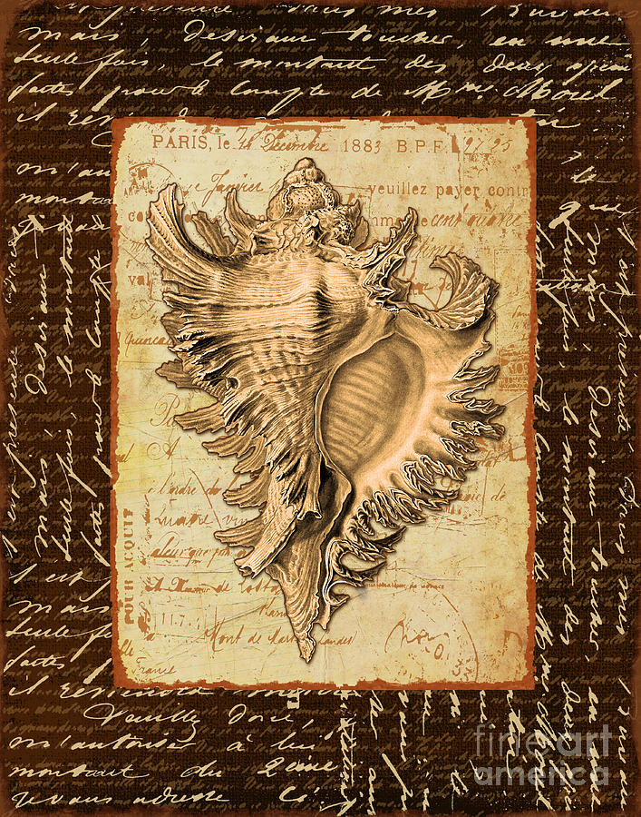 Shell Digital Art - Seashell In Sepia I by Marilu Windvand