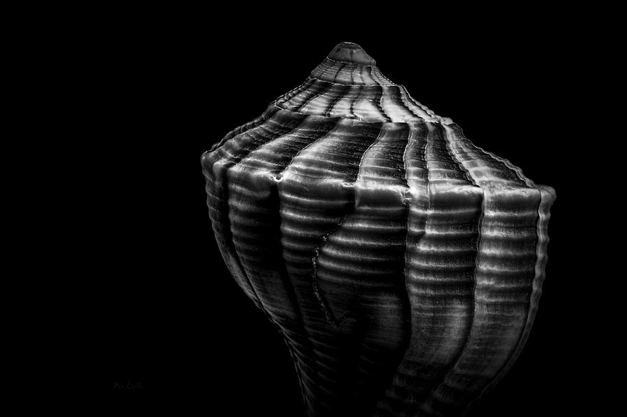 Shell Photograph - Seashell On Black by Bob Orsillo