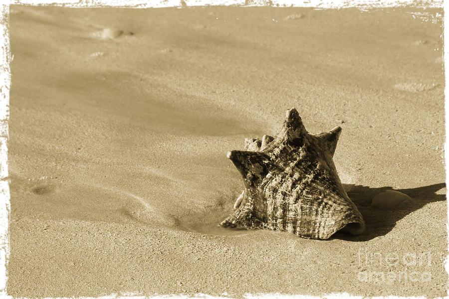 Seashell Photograph - Seashell by Sophie Vigneault
