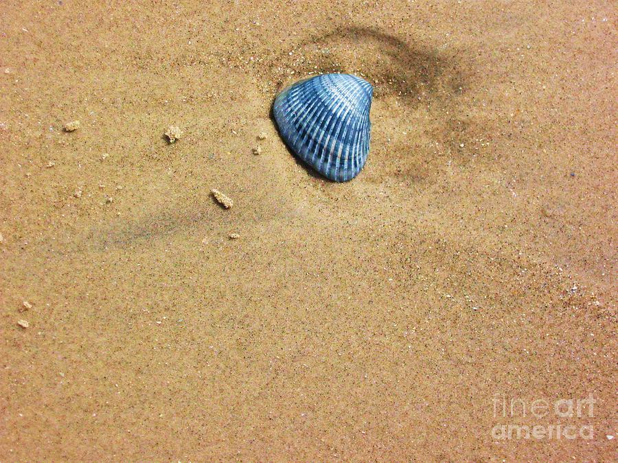 Seashell Photograph - Seashell by Venus