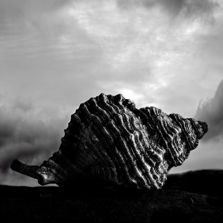 Shell Photograph - Seashell Without The Sea 2 by Bob Orsillo