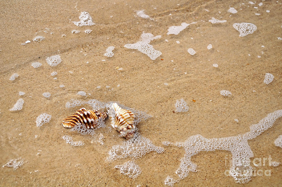 Seashells Photograph - Seashells And Bubbles by Kaye Menner