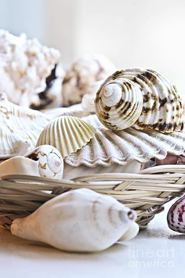 Seashell Photograph - Seashells by Elena Elisseeva