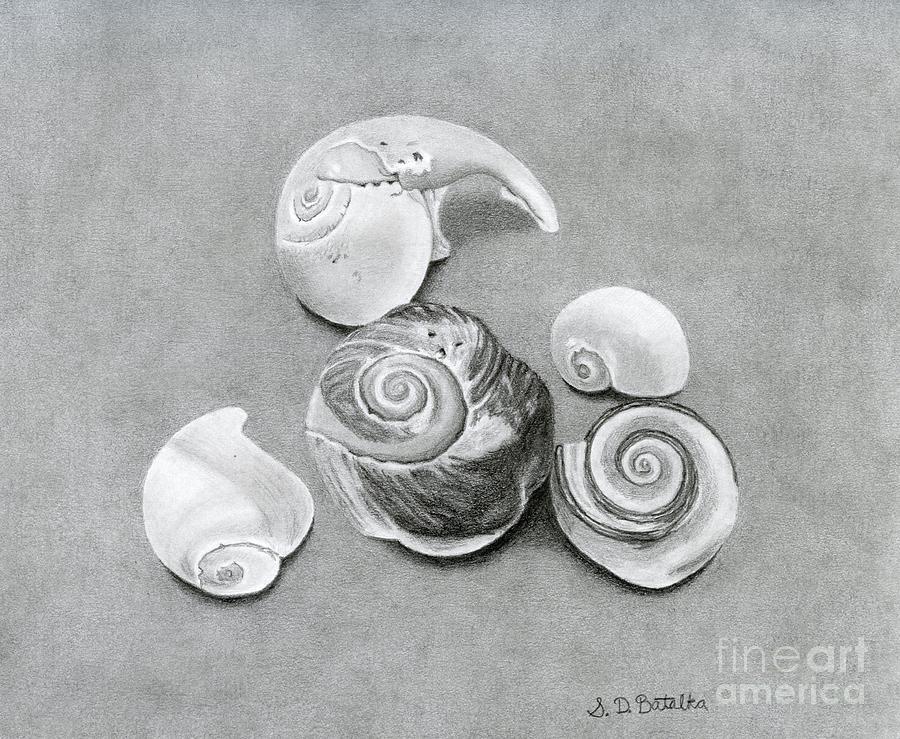 Seashells Drawing - Seashells by Sarah Batalka