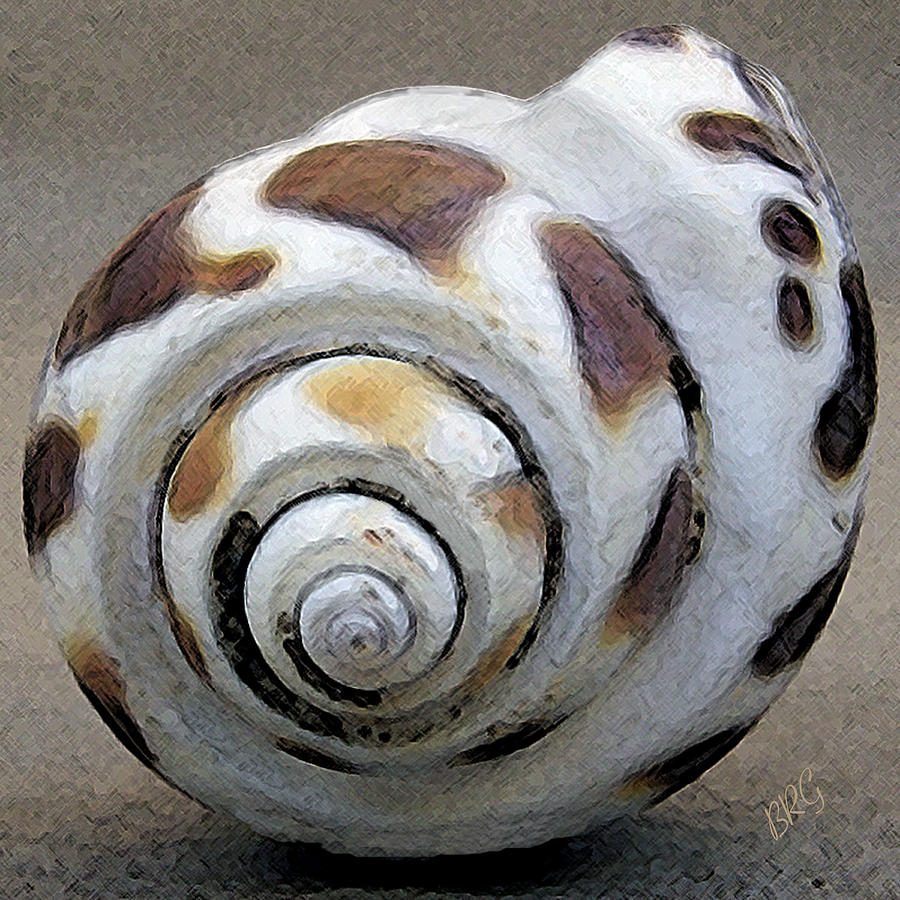 Seashell Photograph - Seashells Spectacular No 2 by Ben and Raisa Gertsberg