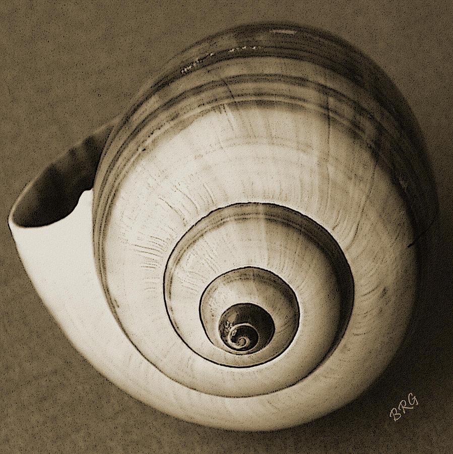 Seashell Photograph - Seashells Spectacular No 25 by Ben and Raisa Gertsberg