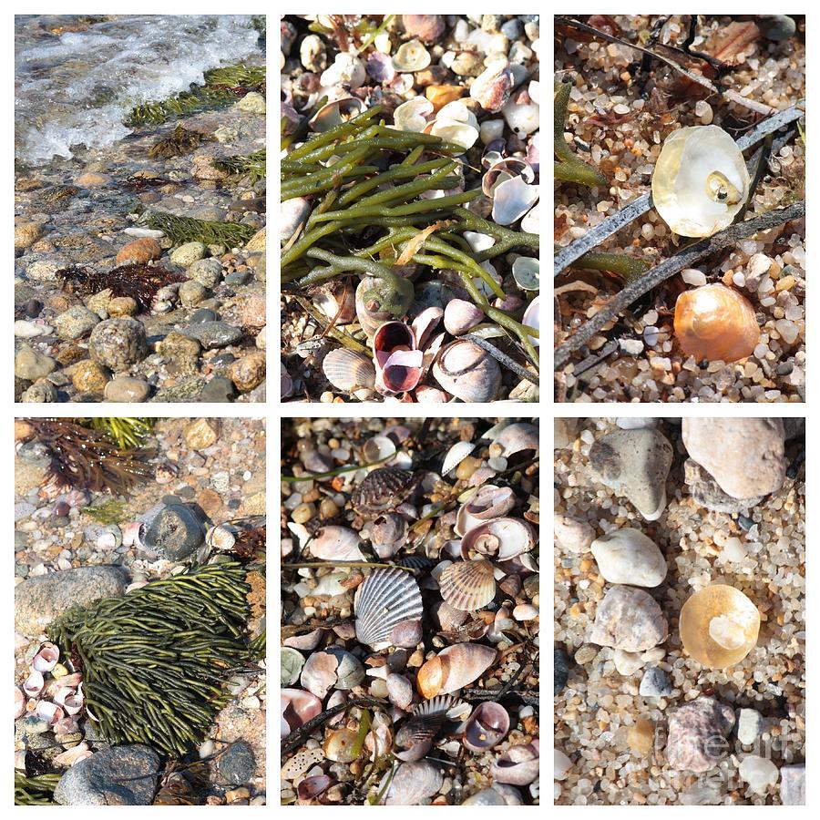 Seashore Photograph - Seashore Collage by Carol Groenen