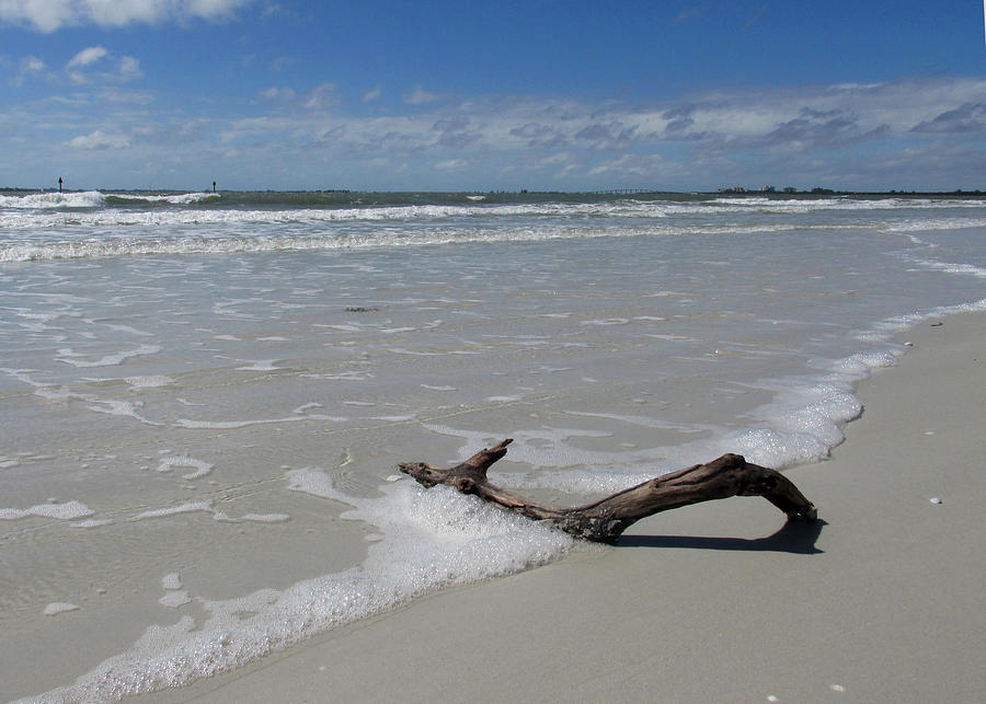 Seascape Photograph - Seashore Driftwood by Rosie Brown