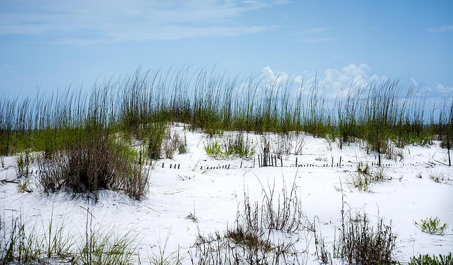 Seaside Fenceline Photograph