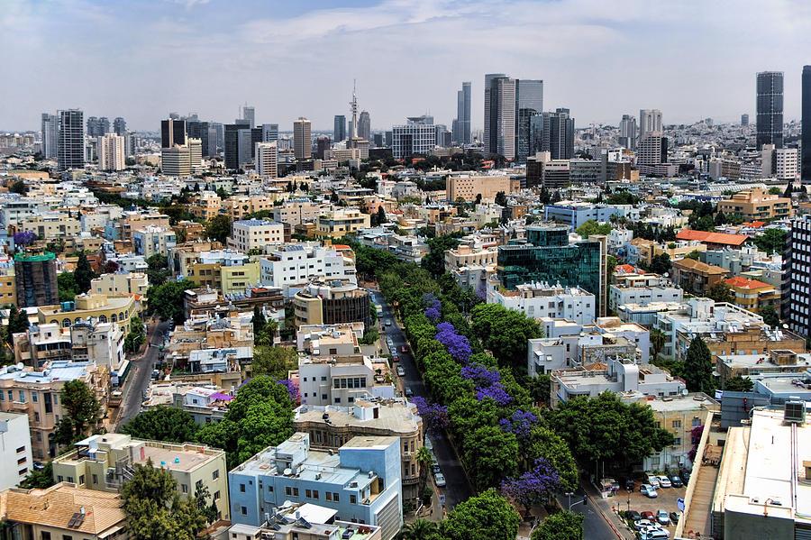 Israel Photograph - season change at Rothschild boulevard  by Ron Shoshani