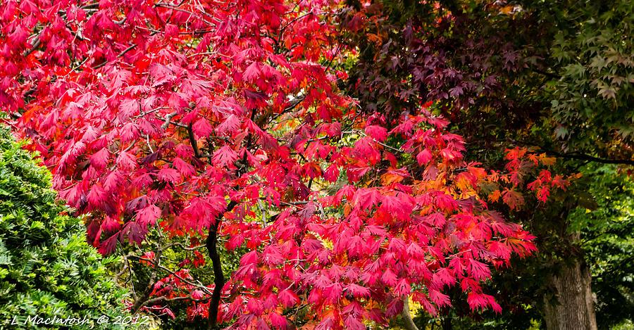 Autumn Photograph - Season Ending by Lauren MacIntosh